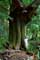 Arbre exemple Gros Arbre en for�t
