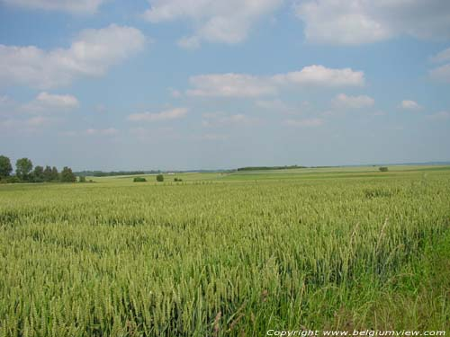Landscape full of corn RAGNIES / THUIN picture