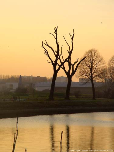 Arbres taill�s au canal ROESELARE / ROULERS photo