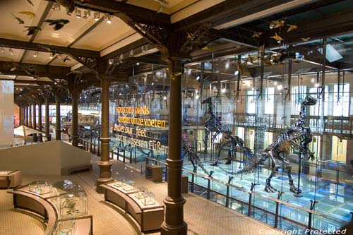 Musuem for natural sciences BRUSSELS-CITY / BRUSSELS picture