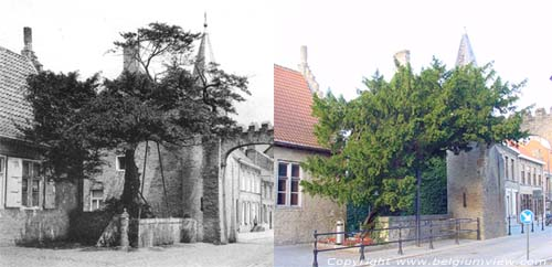 Arbre de Caesar LO-RENINGE photo