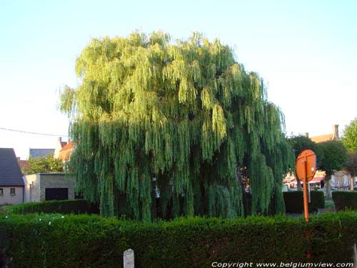 Weeping willow LO-RENINGE picture