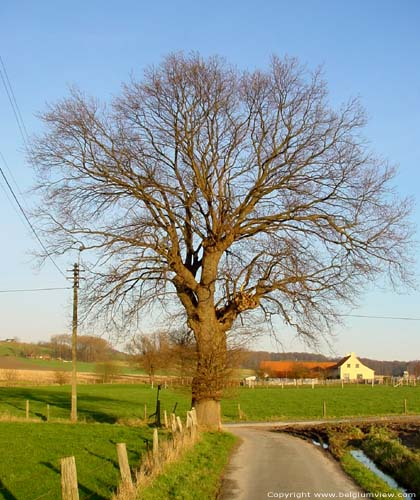 The Oak (in Melden) OUDENAARDE picture