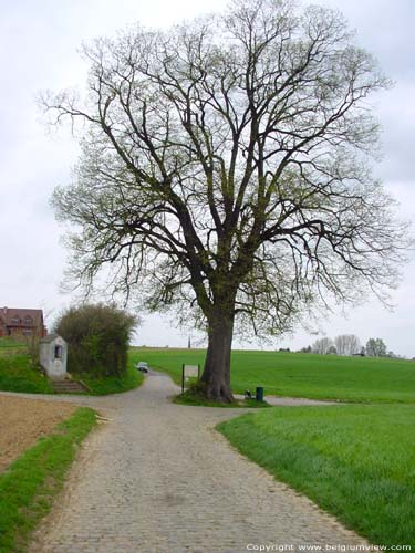 Beautiful Tree (in Duisburg) TERVUREN picture