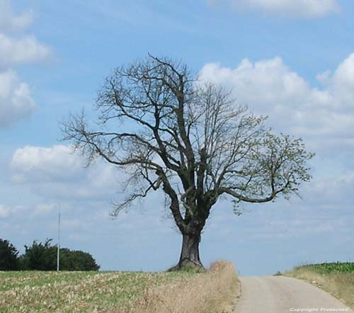 Gallows Tree (in Boirs) BASSENGE picture Picture by anonymous photographer. Few trees between life and death!