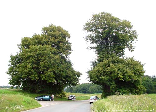 Two lime trees VERLAINE picture