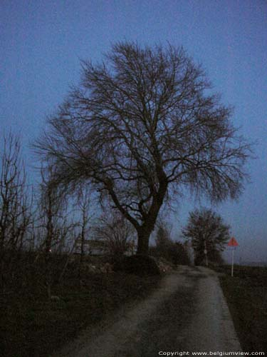 Arbre de Tjenne BORGLOON / LOOZ photo