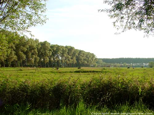 Landschap DAMME photo