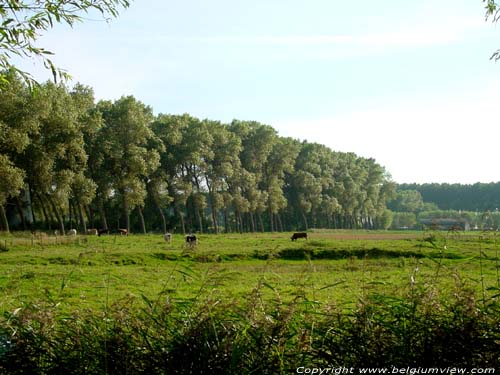 Landschap DAMME picture