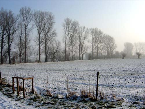 Winter Landscape OORBEEK / TIENEN picture