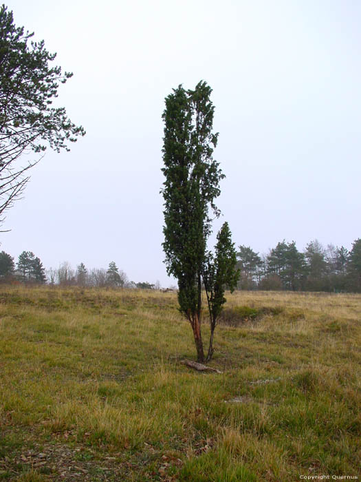 Small tree NISMES / VIROINVAL picture