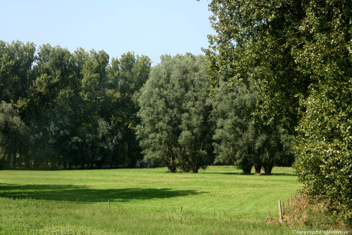 Landscape with Willows MELLE picture