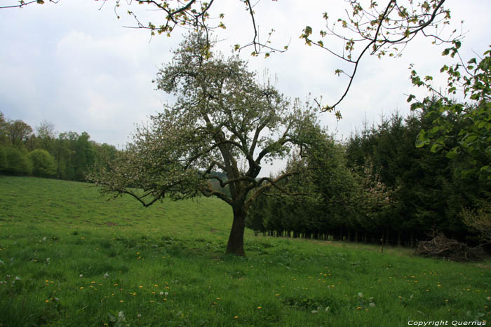Lonesome fruit tree COUVIN picture