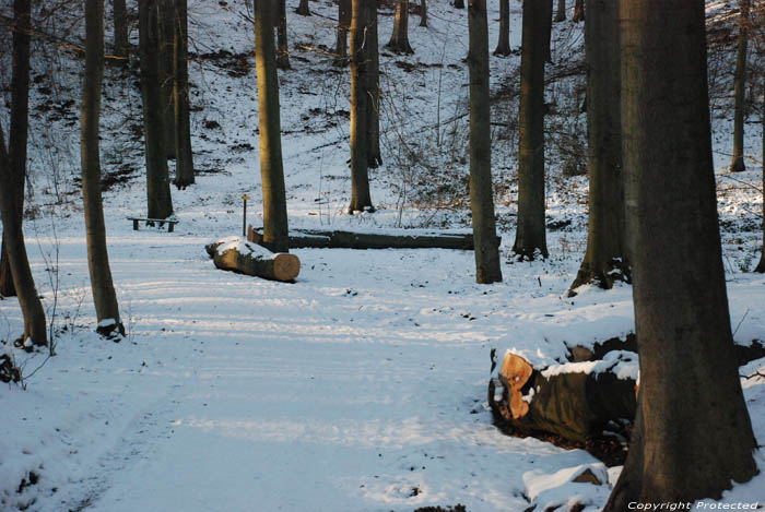 Bank in the forrest of Lauzelle in the snow LOUVAIN-LA-NEUVE / OTTIGNIES-LOUVAIN-LA-NEUVE picture