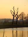 Prunes trees near channel ROESELARE picture: