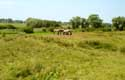 Lanscape with farmer horses DAMME picture:
