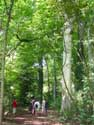 Lappersfort forest BRUGES picture: