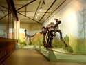 Musuem for natural sciences BRUSSELS-CITY / BRUSSELS picture: