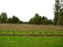 German Military Cemetery LOMMEL picture: