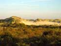 Natural park The West Corner DE PANNE picture: