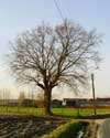 The Oak (in Melden) OUDENAARDE picture: