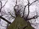 Arbre PULDERBOS / ZANDHOVEN photo: