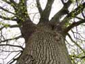 Beautiful Tree (in Duisburg) TERVUREN picture: