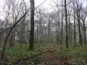 Foret de Veurs TEUVEN / FOURONS photo: