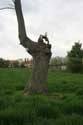 Old tree (in danger for Watefront project) NIEL picture: