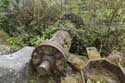 Remains of Watermill  (in Bouffioulx) CHATELET picture: