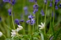 Halle Forrest and bluebells HALLE picture: